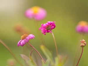 Spring Bliss - original