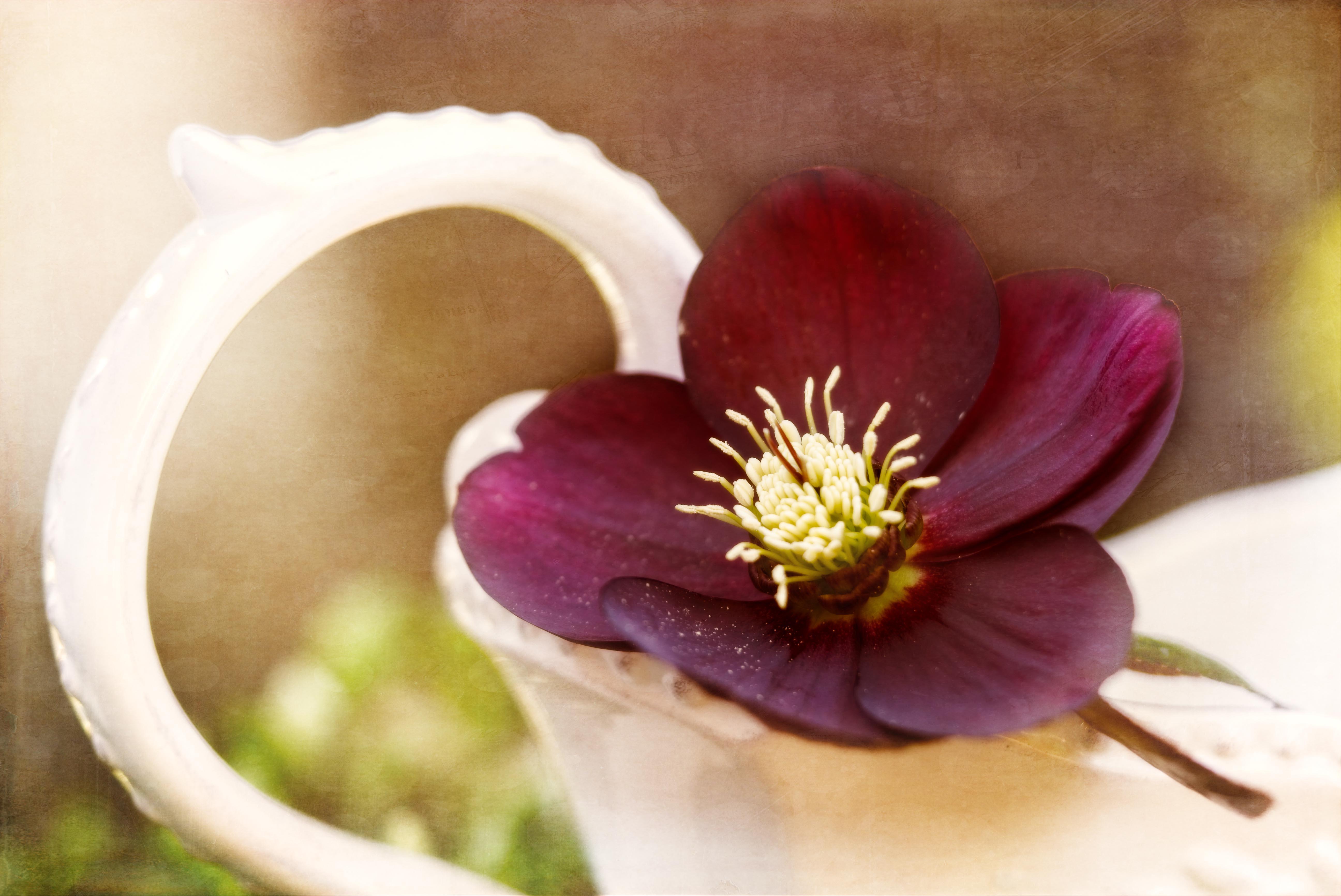 spring – Photo by Chris Kilpatrick